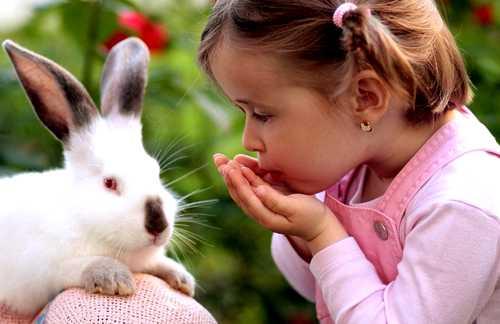 niña asperger animales